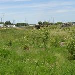 D2 Wetlands