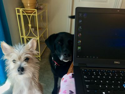 Ted Baxter and Dixie help Jillian Garrigues work from home.
