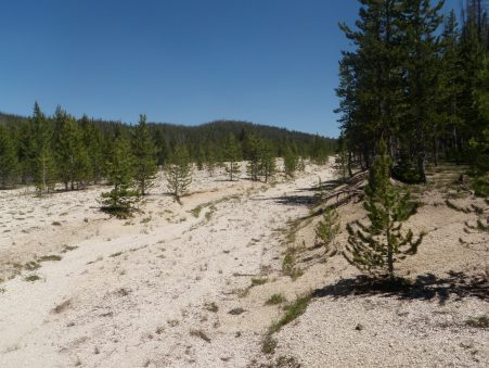 Hoodoo Meadows Airstrip corridor and borrow trench - Photo taken near entrance facing North.