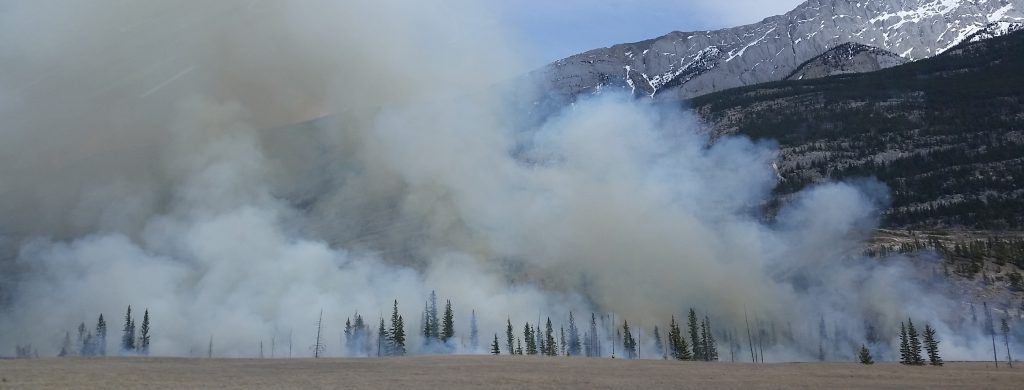 Help prevent human-caused wildfires along roadways